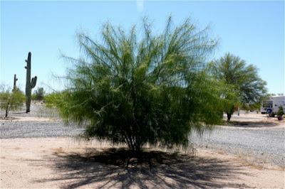 Analysis shows that the palo verde was designed to adapt by the Master Engineer.
