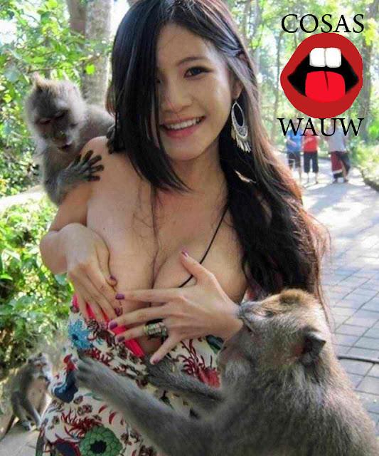 monos mirando las tetas de una chica