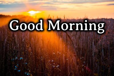Download Best of Good Morning Images