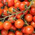 Cara Usaha Budidaya Tomat Sayur Segar Menguntungkan Pasaran