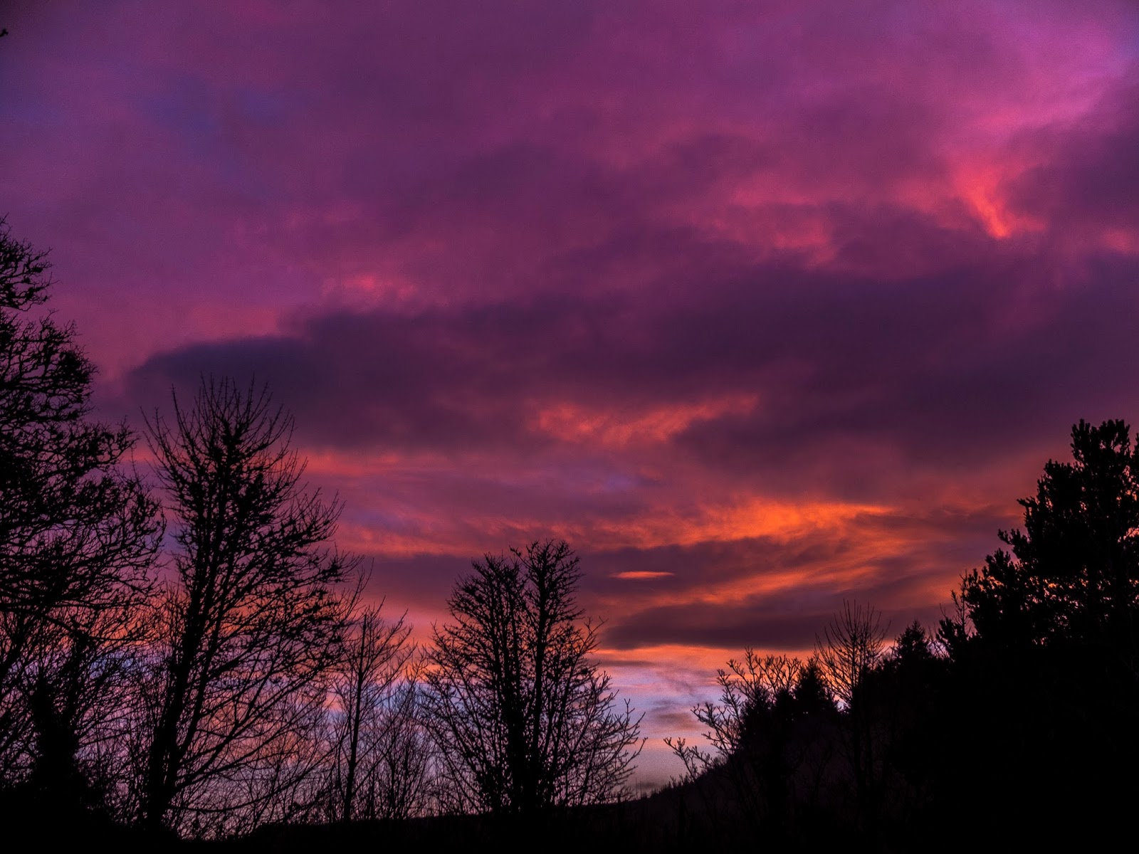 Tree silhouettes at sunset with dramatic pink and purple clouds in North Cork, Ireland.