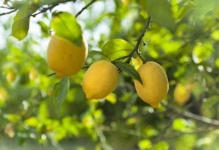 Zinde Kalmak İçin Doğal C Vitamini