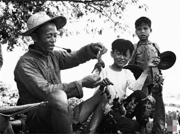 Chiến dịch diệt chim sẻ ở Trung Quốc và những hệ lụy của nó