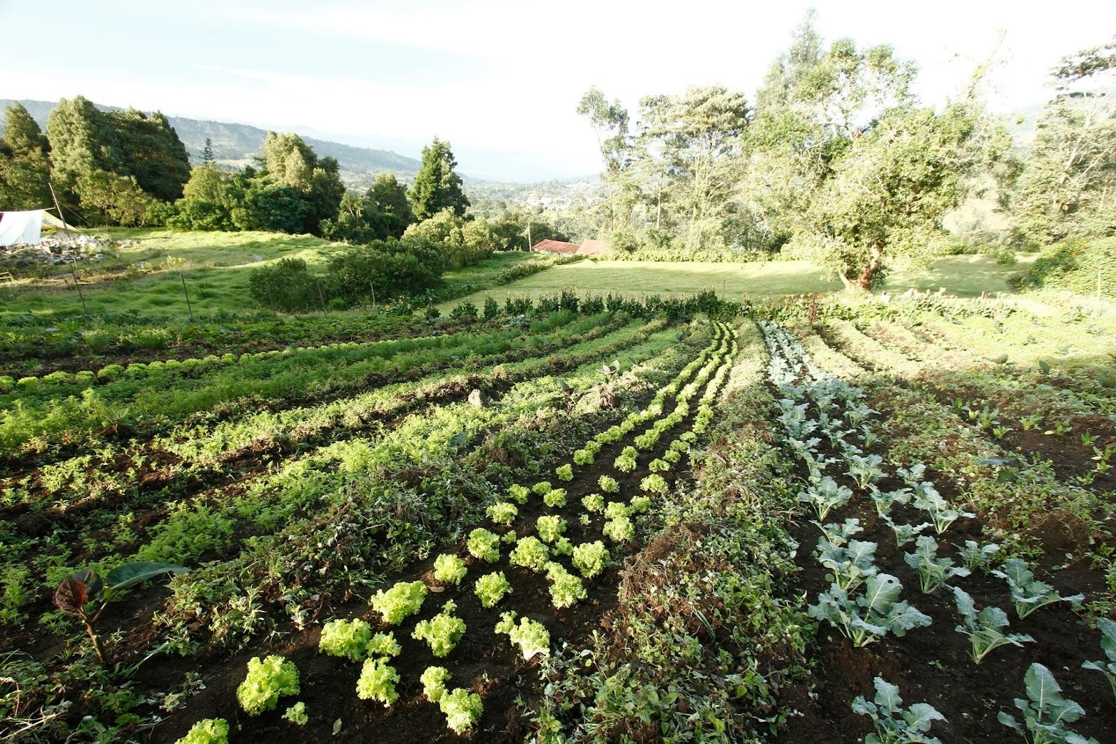 Maestra de primaria huertos y huertas for Plantas beneficiosas para el huerto