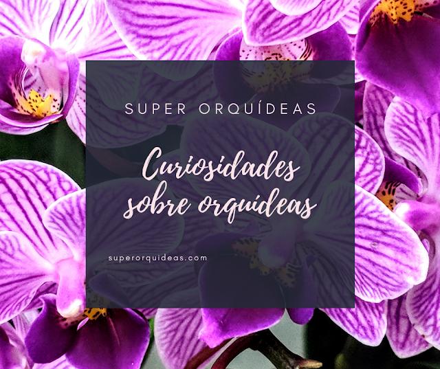 8 Curiosidades sobre orquídeas