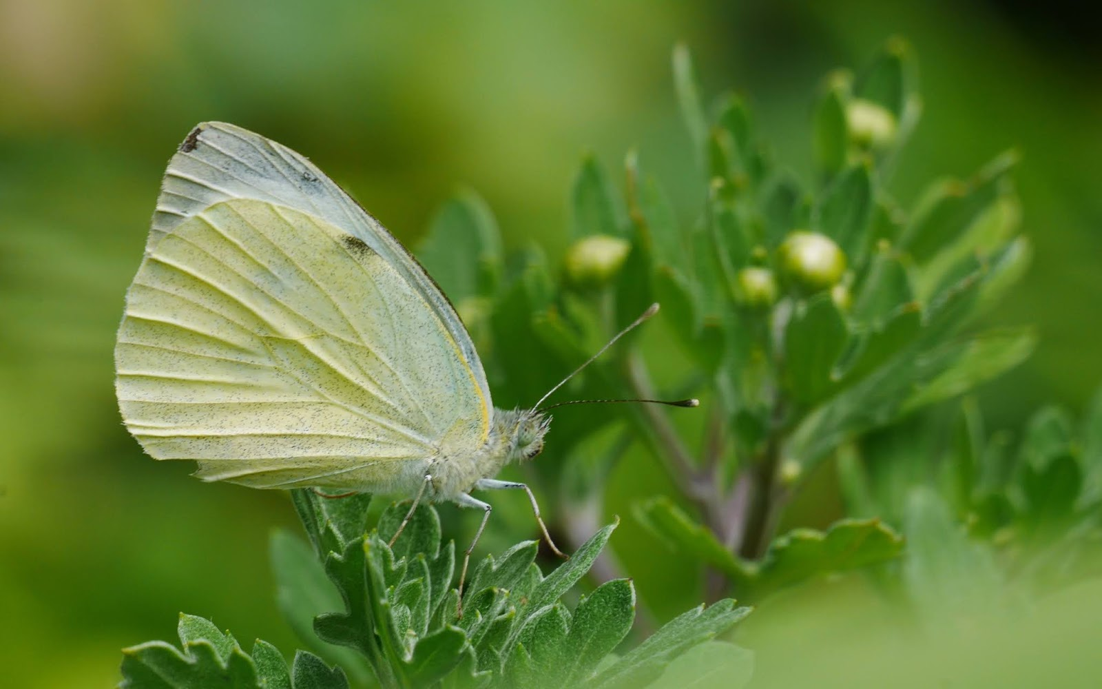 Cent Metres Carres Mes Lepidopteres I