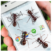 Ants On Screen Funny Joke APK Download For Android
