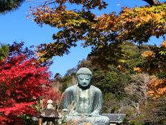 鎌倉大仏・紅葉