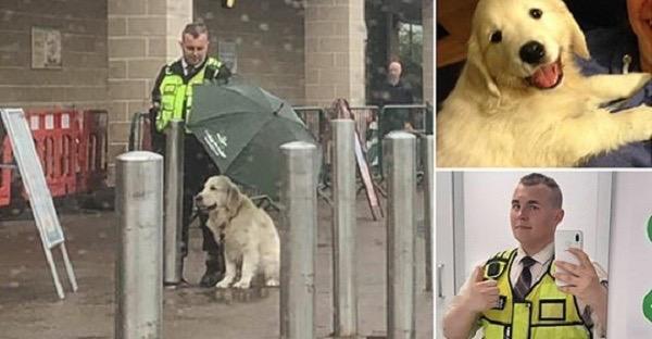 Соцсети растрогал поступок охранника, который укрыл зонтом чужого пса!