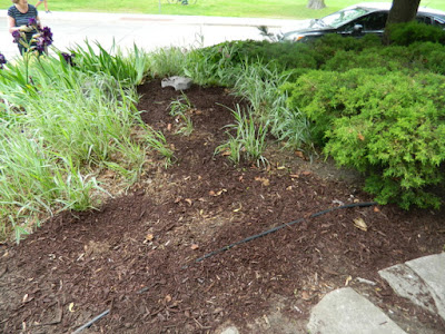 Toronto Riverdale Summer Front Garden Cleanup After by Paul Jung Gardening Services--a Toronto Organic Gardener