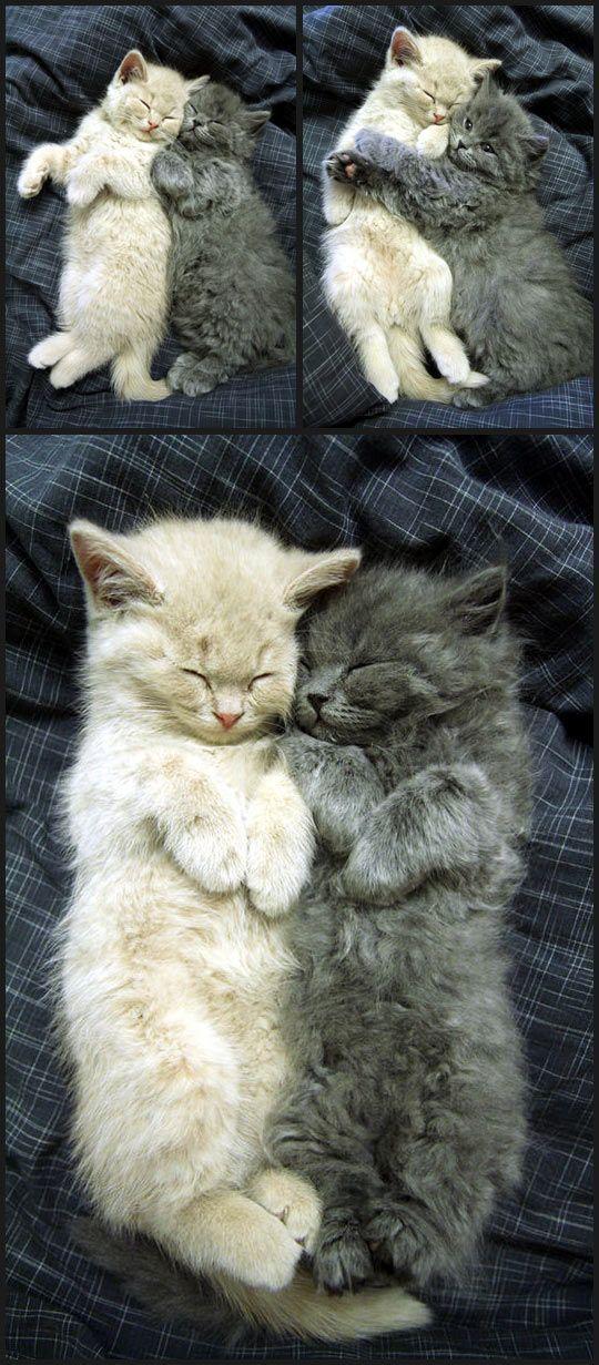 Cuddling Cute Cats