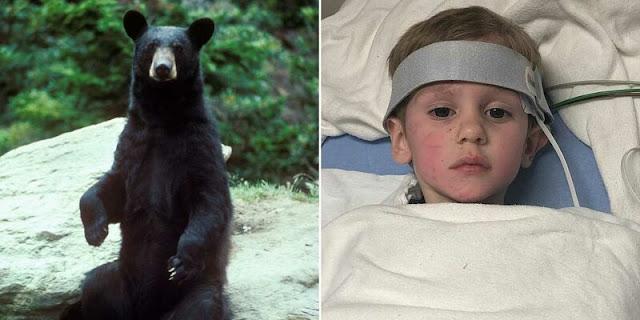 Дружелюбный медведь спас 3-летнего мальчика, пропавшего в лесу