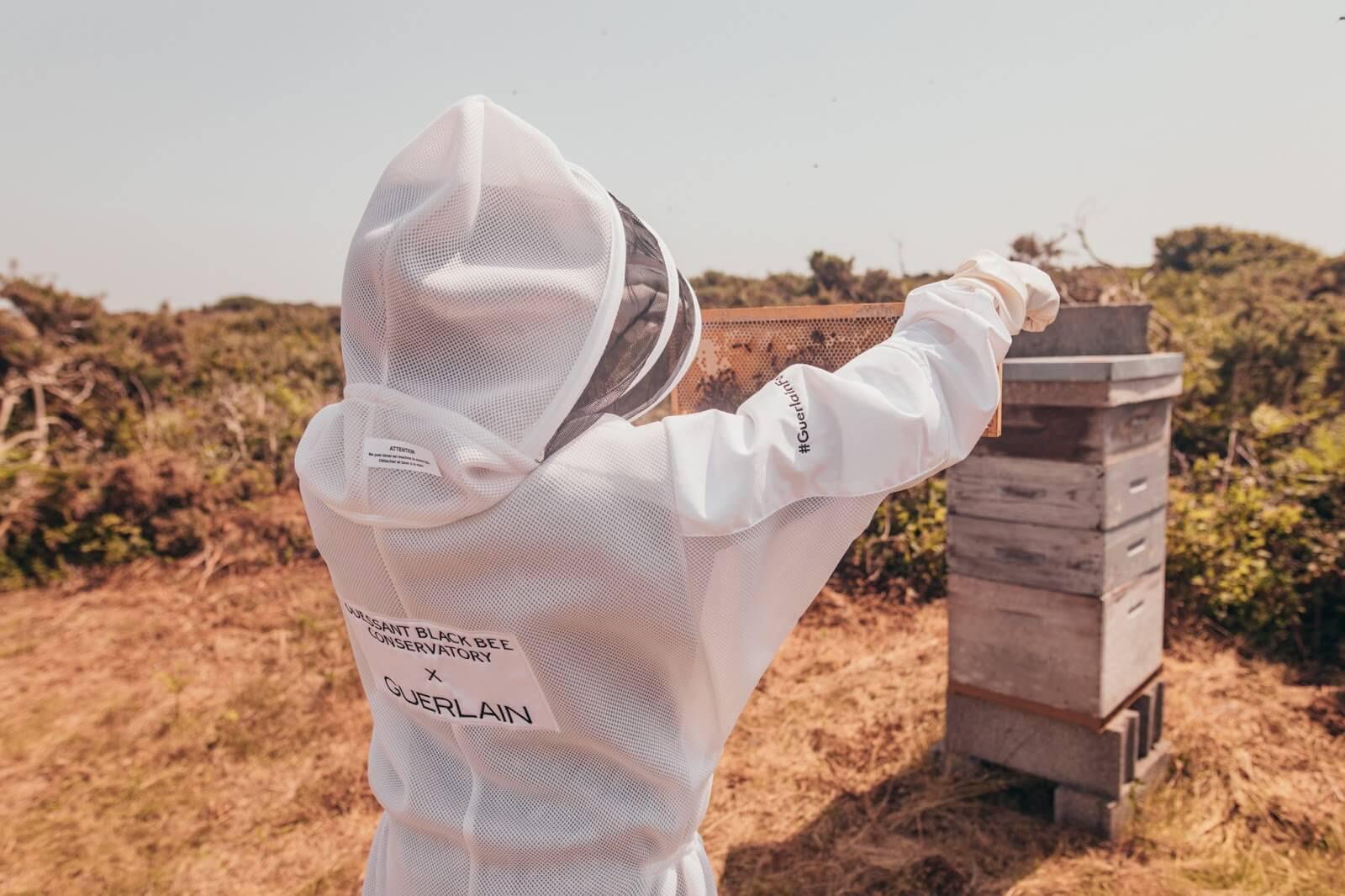 guerlain-abeille-royale-noire-ouessant
