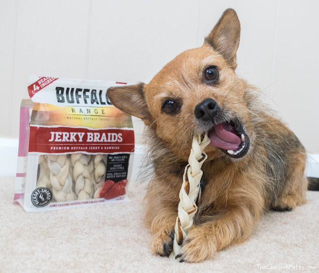 Jada with a Buffalo Range Jerky Braids Chew