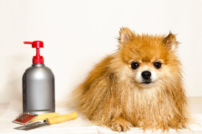 The Best Treatment For Dog Fleas - 06 Effective Methods
