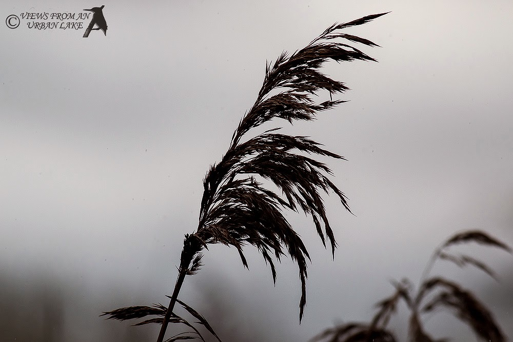 Reed in Silhouette - one of the first of today's abstracts