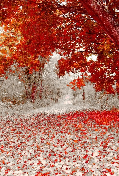 First Snowfall In Duluth Minnesota A1 Pictures