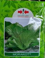 sawi pahit, benih sawi morakot, cap panah merah, jual benih sawi, toko pertanian, toko online, lmga agro
