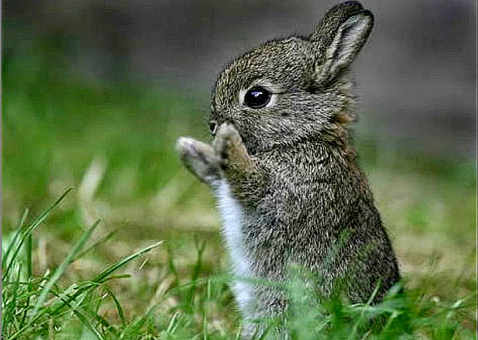 Cute Bunny Wallpaper Desktop All Wallpapers Desktop