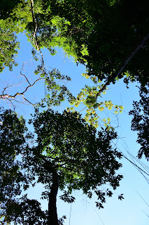 trees in Puriscal