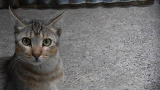Cute cat eyes