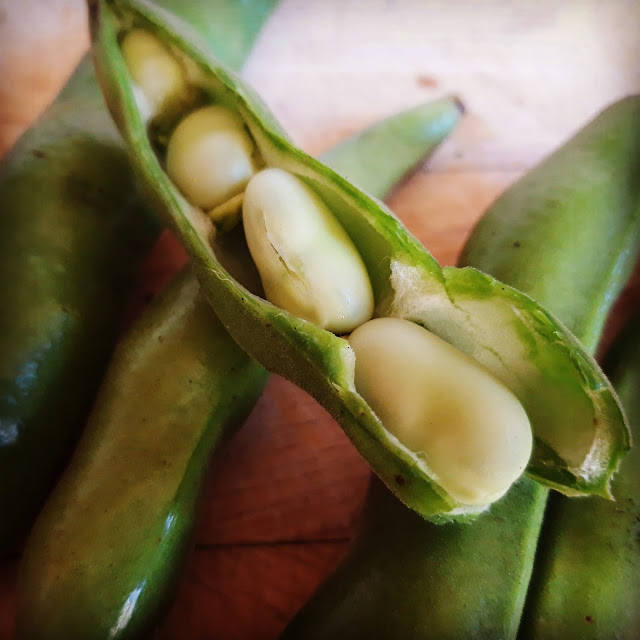 Close up of broad beans in a pod