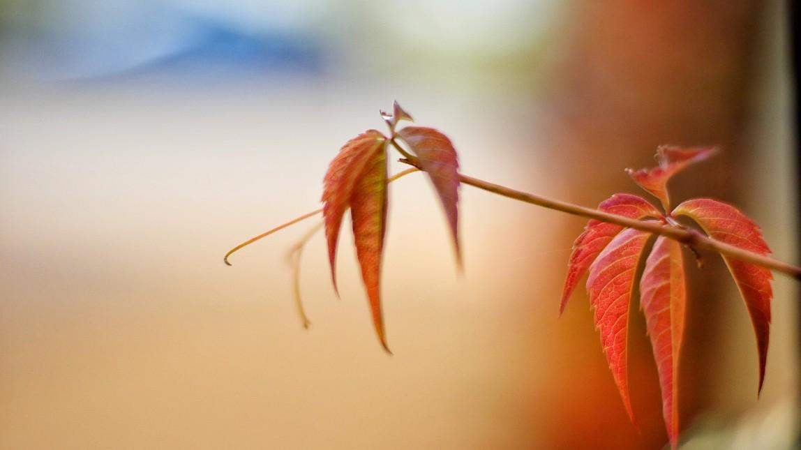 Herbst, blätter, herbstfarben