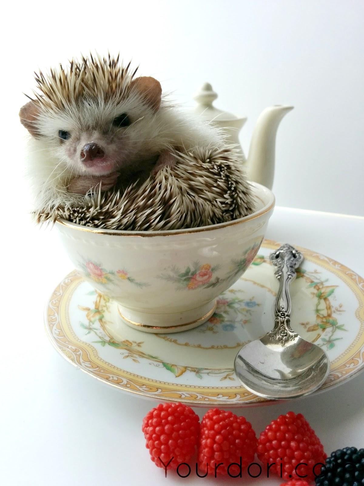 Cute Hedgehog, Planners, Lists, List Making, Gold Bulldog Clips, Midori, Travelers Notebook