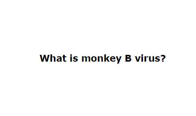 What is monkey B virus?