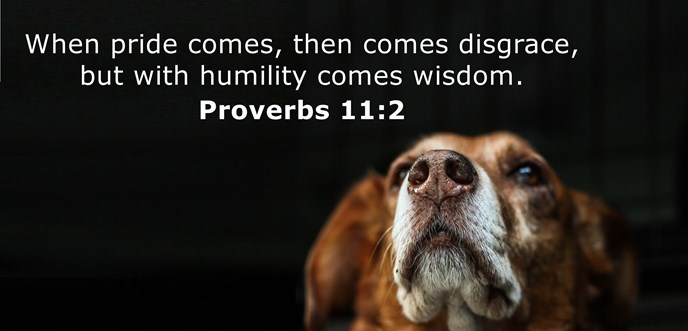 When pride comes, then comes disgrace, but with humility comes wisdom.