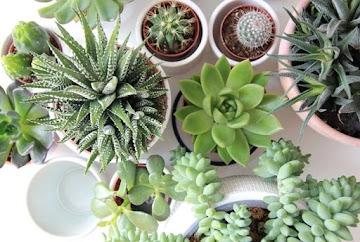 13 motivos para cultivar plantas em casa