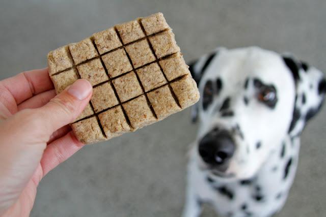 Dalmatian dog begging for a homemade chocolate bar shaped dog treat