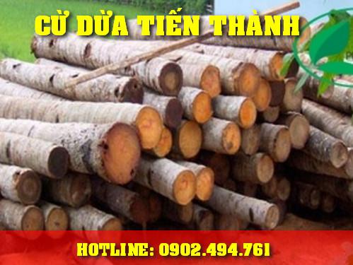 Bảng báo giá Cừ Dừa 5m, 6m, 7m, 8m, Bán Cừ Dừa Giá rẻ TPHCM