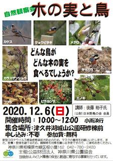 自然観察会「木の実と鳥」