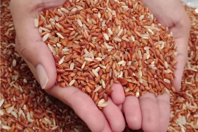 pakan perkutut beras merah