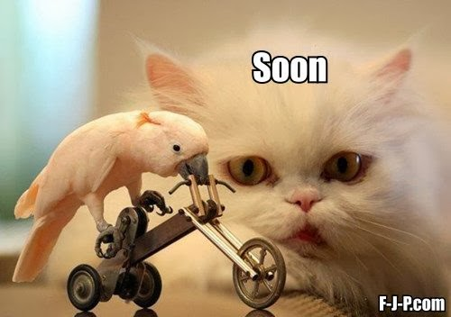 Funny Cycling Budgie Cat Soon Joke Picture