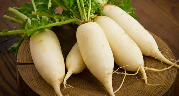 Radish is a type of vegetable that is depression inward calories The benefits of Radish