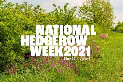It's National Hedgerow Week