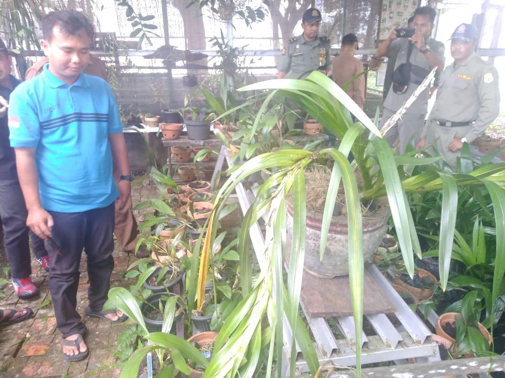 Tumbuh di TNBS Tanjabtim, Beberapa Jenis Anggrek Dibudidayakan