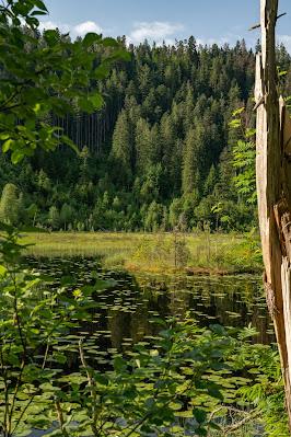 Premiumwanderweg Murgleiter | Etappe 4 von Schönmünzach nach Baiersbronn | Wandern nördlicher Schwarzwald 08