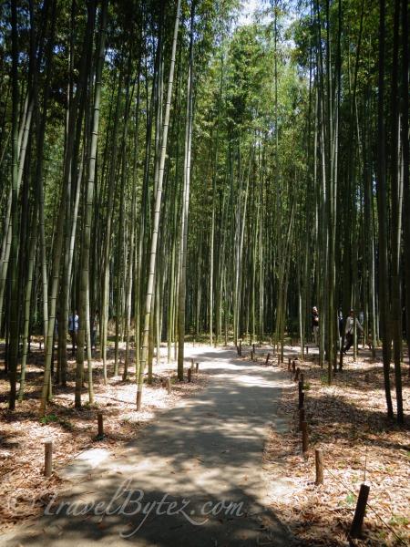 Bamboo Grove