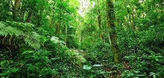 Hutan dan Kehidupan