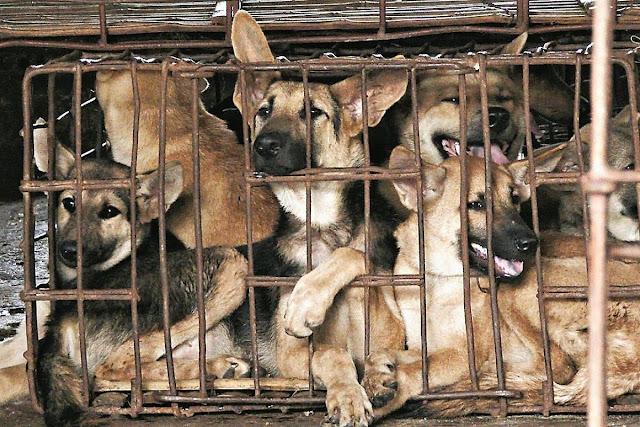 Китайците спират да консумират кучета и котки (ВИДЕО, СНИМКИ)