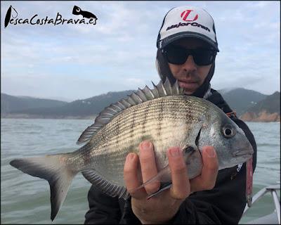 sargo major craft new crostage kurodai fiiish black minnow pesca costa brava jjpescasport - TRAS EL TEMPORAL... SARGOS!