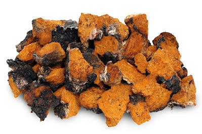 Best chaga mushroom supplement