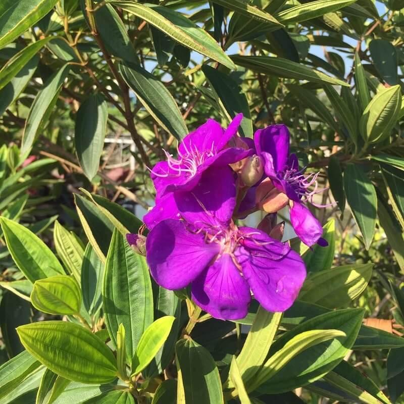 Các loại hoa tại Làng Hoa Sa Đéc 4