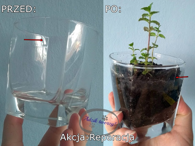 Akcja Reperacja u Adzika - doniczka z recyklingu, ze szklanki
