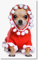mittljuvahem, mittljuvaheminsta, mitt ljuva hem, livsstilsblogg, vardagsblogg, influencer livsstil, influencer göteborg, influencer västra götalands län, hundblogg, blogg om hundar, farligt för hund, bra för hund, hund jul, hemmafru, svensk hemmafru, swedish housewife