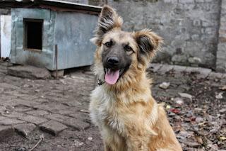 виртуальное путешествие, настроение своими руками, Яна SunRay, дворовой пес, собака, смесь овчарки