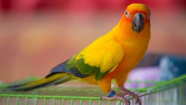 Meskipun burung adalah hewan peliharaan yang mudah dirawat Hal Yang Harus Dipikirkan Sebelum Membeli Burung